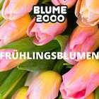 Blume 2000 Katalog ( Abgelaufen )