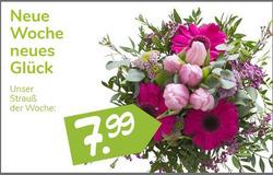 Angebote von Blumen Risse im Berlin Prospekt