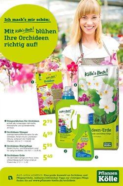Angebote von Baumärkte und Gartencenter im Pflanzen Kölle Prospekt in Berlin ( 25 Tage übrig )