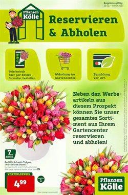 Pflanzen Kölle Katalog ( Gestern veröffentlicht )
