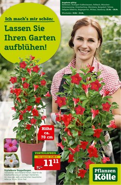 Pflanzen Kölle Katalog ( 3 Tage übrig )