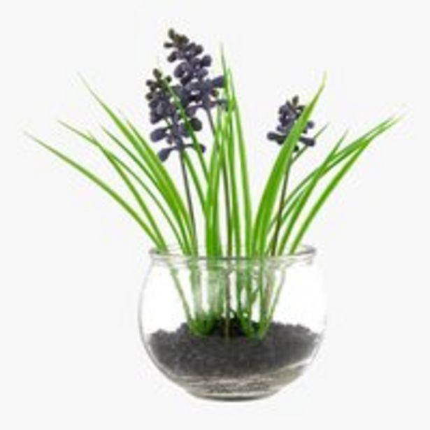Kunstpflanze MAGNAR Ø10xH19cm Glas für 1,5€